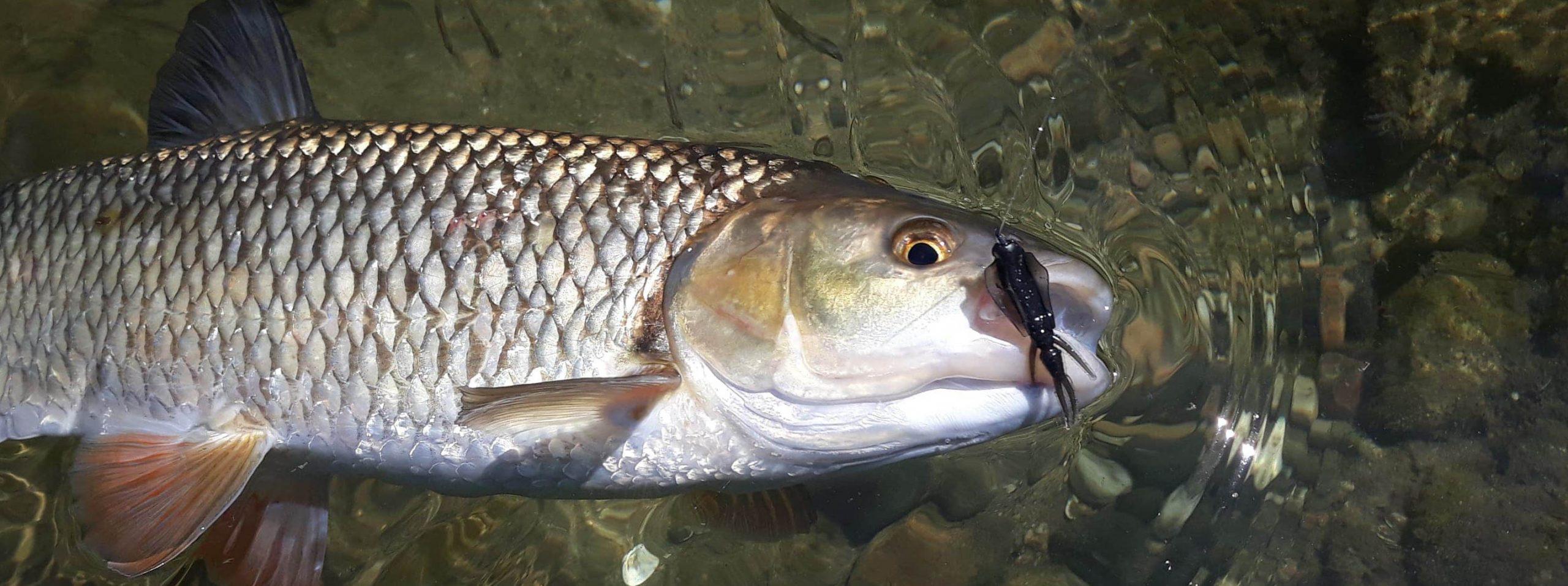 Pêche finesse en rivière