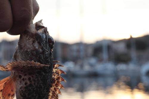 Rockfishing : Privilégiez le Dropshot