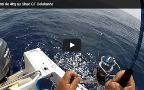 {Vidéo} Denti 4kg – Shad GT