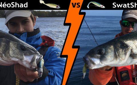 Pêche du Bar : SwatShad vs NéoShad par Loïc
