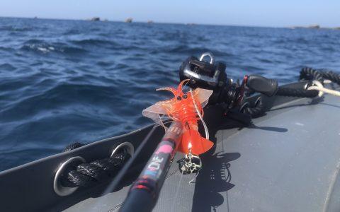Pêche en mer : Utilisation de la Crazy craw sur un tenya