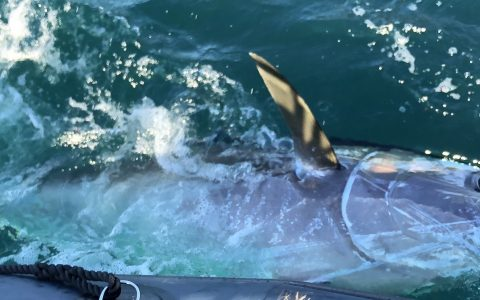 {Vidéo} Trip pêche Bretagne J-1 – Gros thon aux leurres souples